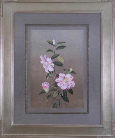 Paul Jones Paul Jones b 1921 Camellia Paul Jones Supreme 1976