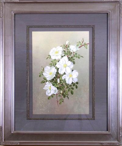 Paul Jones Paul Jones b 1921 Rosa Nevada Rose 1976