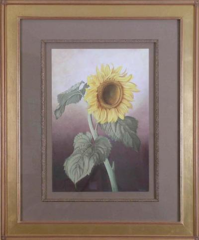 Paul Jones Sunflower Healianthus Annus 1976