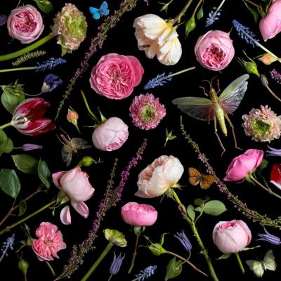 Paulette Tavormina Botanical VI Juliet Roses 2013