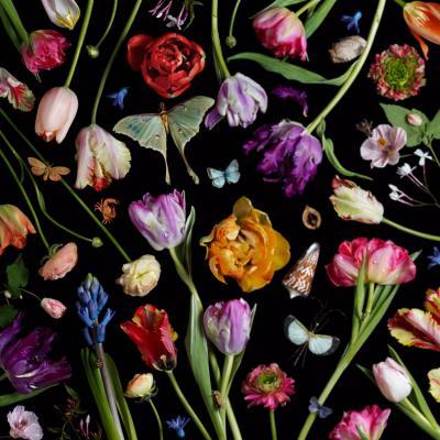 Paulette Tavormina Botanical VII Tulips 2014