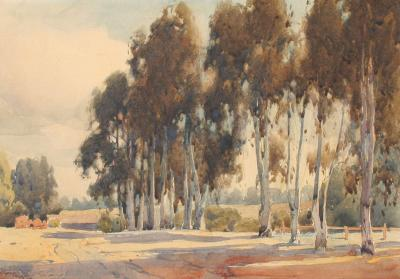 Percy Gray Stand of Eucalyptus Trees