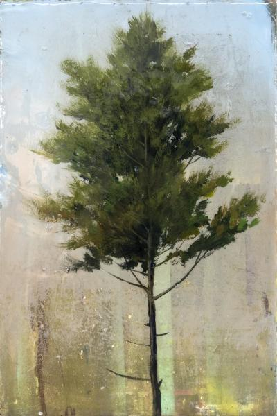 Peter Hoffer Cedar