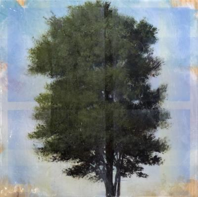 Peter Hoffer Tree Through Window Pane