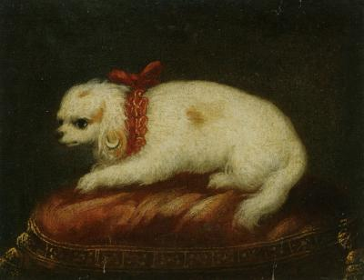 Pierfrancesco Cittadini A Portrait of a Maltese Sitting on a Cushion