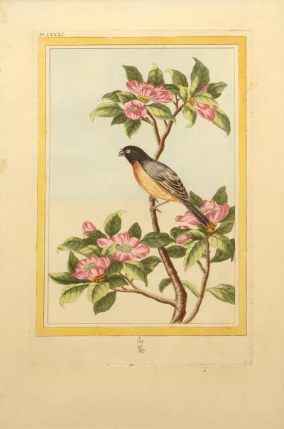 Pierre Joseph Buchoz Les Fleurs les plus belles et les plus curieuses a set of 12 Chinese flowers