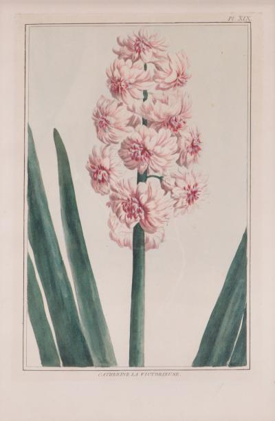 Pierre Joseph Buchoz Pierre Joseph Buchoz group of six Hyacinths engraved plates 1781