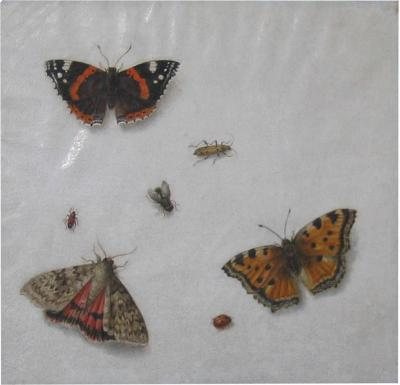 Pieter Barbiers II Still Life with Butterflies and Insects