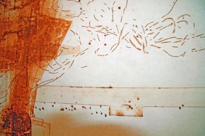Pietro Calabrese Organic Painting