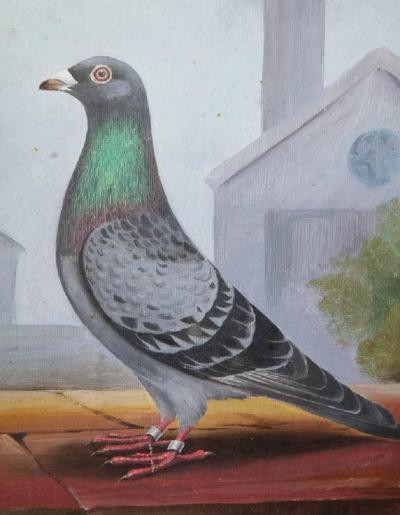Portrait of a Prize Pigeon
