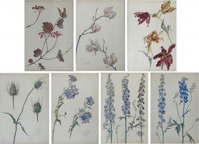 Rare Set of Floral Watercolors by Accard