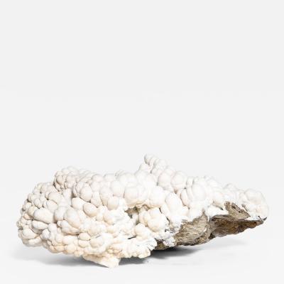 Rare great white coral