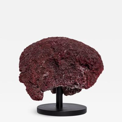 Rare red coral on black wrought iron base