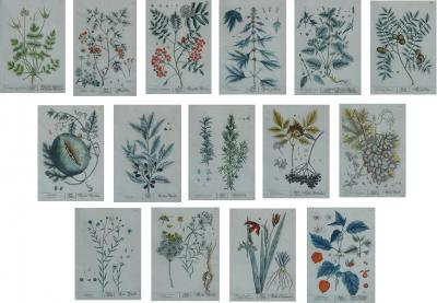 Rare set of 15 18th century hand colored engravings by Elizabeth Blackwell