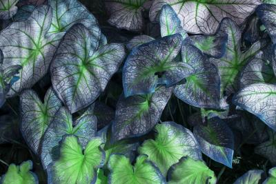 Robert Funk Dreamy Blue Plants with a natural Heart Shape cutout