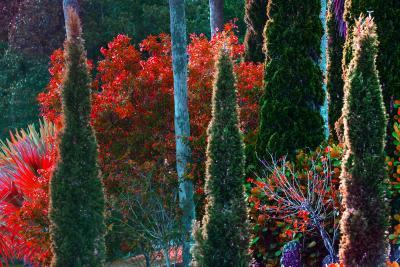 Robert Funk Tropical Colorful Foliage Trees Flaunt Brilliant Color Crimson leaves