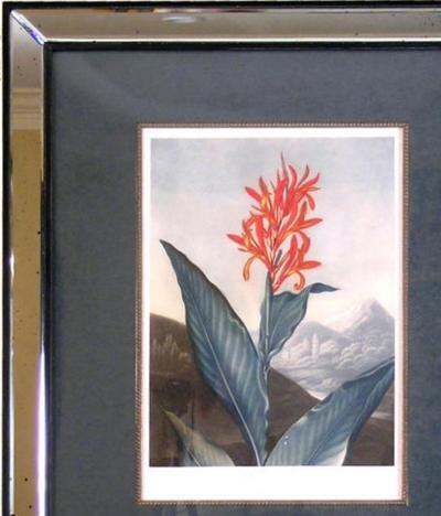 Robert John Thornton Dr Robert John Thornton Indian Reed Cana 1804