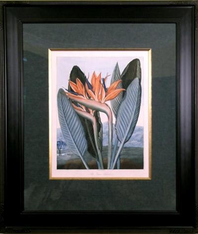 Robert John Thornton Dr Robert John Thornton The Queen Flower Bird of Paradise 1800
