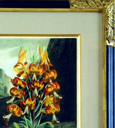 Robert John Thornton Dr Robert John Thornton The Superb Lily 1799