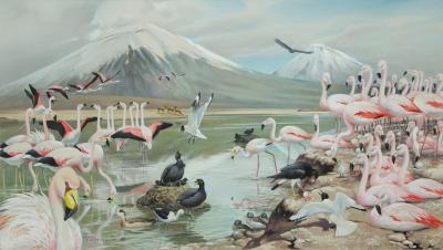 Roger Tory Peterson James Flamingos in the Andes