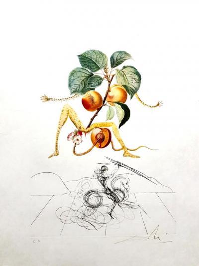 Salvador Dal Salvador Dali Apricot Original Hand Signed Lithograph