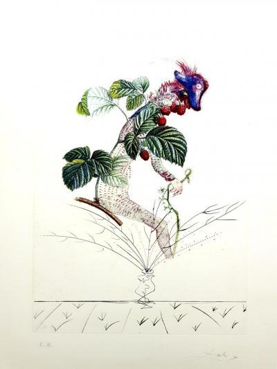 Salvador Dal Salvador Dali Raspberry Original Hand Signed Lithograph