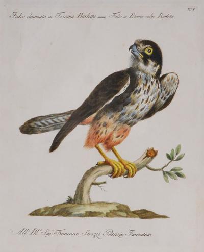 Saverio Manetti MANETTI Saverio Group of Six Birds of Prey