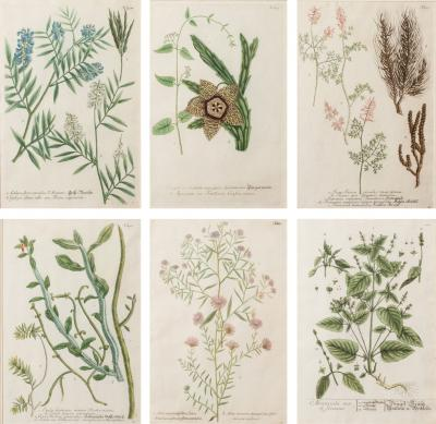 Series Of Six Botanical Prints 18th Century