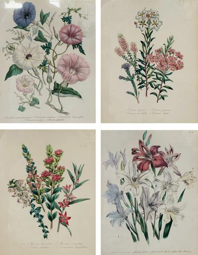 Set of Four 19th Century Botanical Prints Attributed to Mrs Loudon