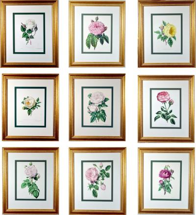 Set of Nine Botanical Engravings Henry Curtis The Beauty of the Rose