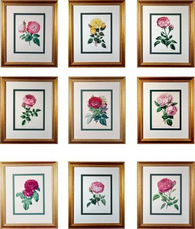 Set of Nine Botanical Engravings of Roses Henry Curtis The Beauty of the Rose