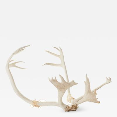Set of Vintage Caribou Antlers with Twine