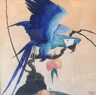 Stark Davis Blue Parrot