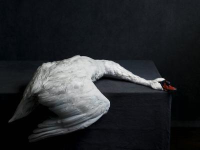 Stephan Vanfleteren Still life Swan by Stephan Vanfleteren