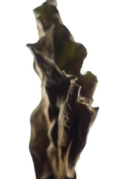 Stephen Ciuccoli Dried Tarot No 1
