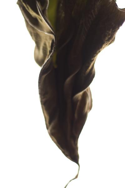 Stephen Ciuccoli Dried Tarot No 2