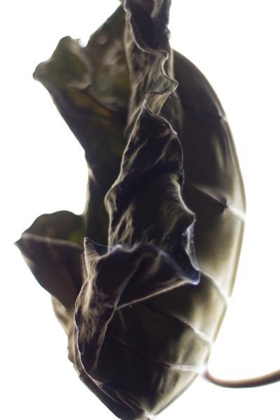 Stephen Ciuccoli Dried Tarot No 3