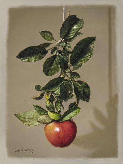 Stone Roberts Branch with Apple