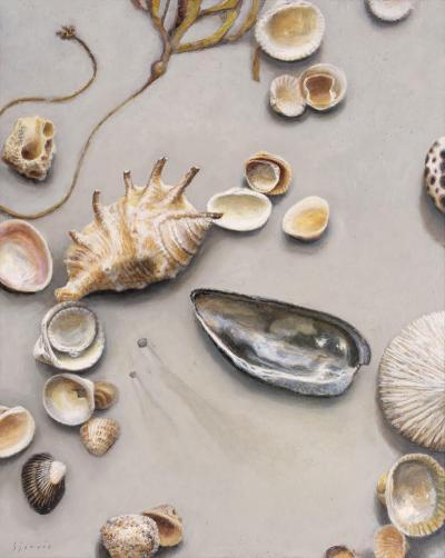 Susan N Jarvis Scattered Shells