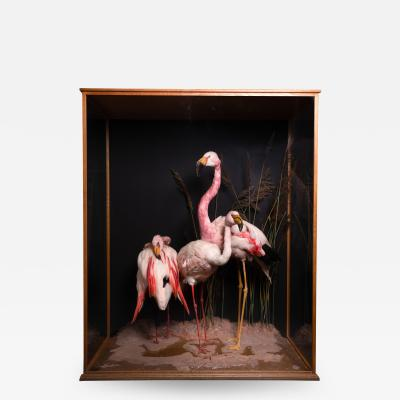Taxidermy Composition of Three Flamingos in Glass Case