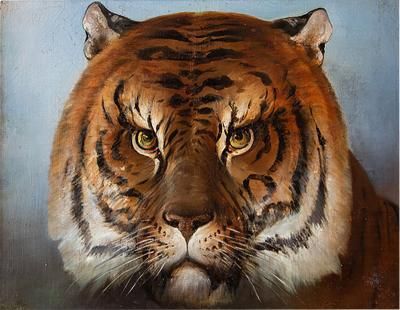 The head of a tiger