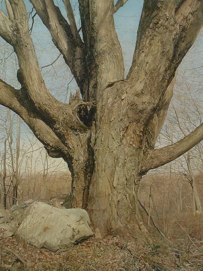 Trey Friedman Trees On a Line 1
