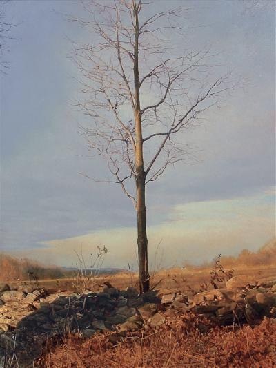Trey Friedman Trees On a Line 53A