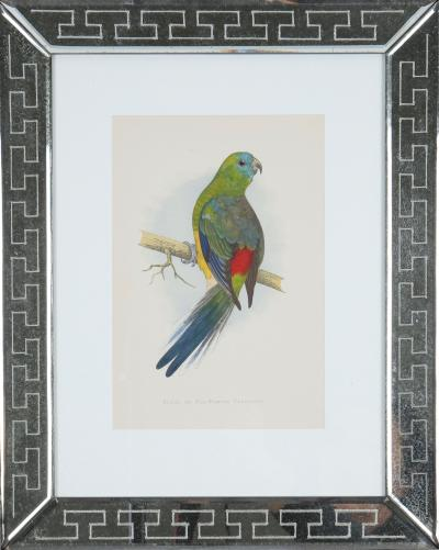 W T Greene coloured woodcut engravings 1884
