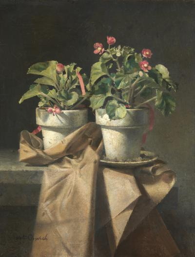 Walter Tandy Murch Begonias