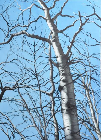 White Birch by Andrew Ek