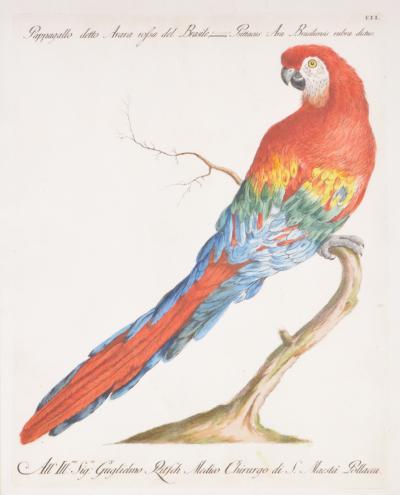 saverio manetti Saverio MAneti Group of six parrots 6 engraved plates 1776