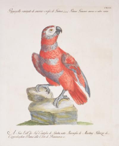 saverio manetti Saverio Manetti Lorenzo orenzi Violante vanni Two Parrots 1776