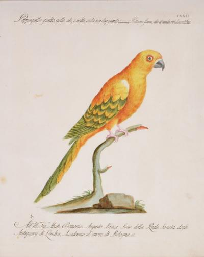 saverio manetti Saverio Manetti group of six parrots engraved plates 1776