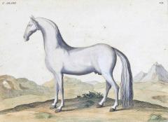 Eisenberg Prints of Four Horses by Baron DEisenberg - 1778848
